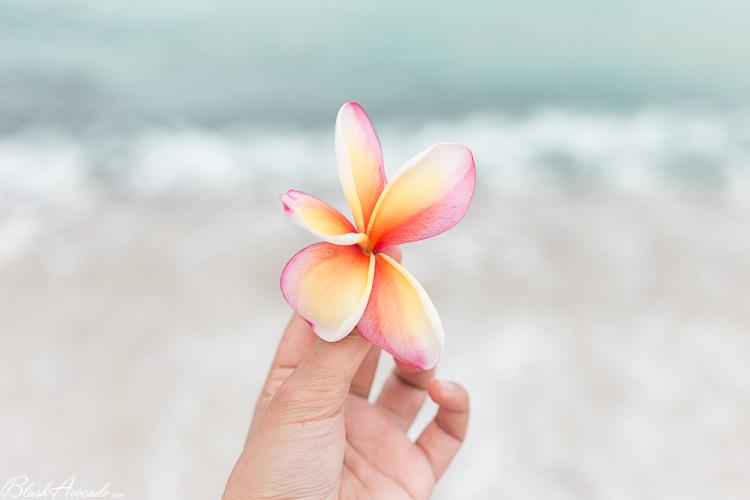Ce qui va changer en 2018 + nouvel an aux Seychelles !
