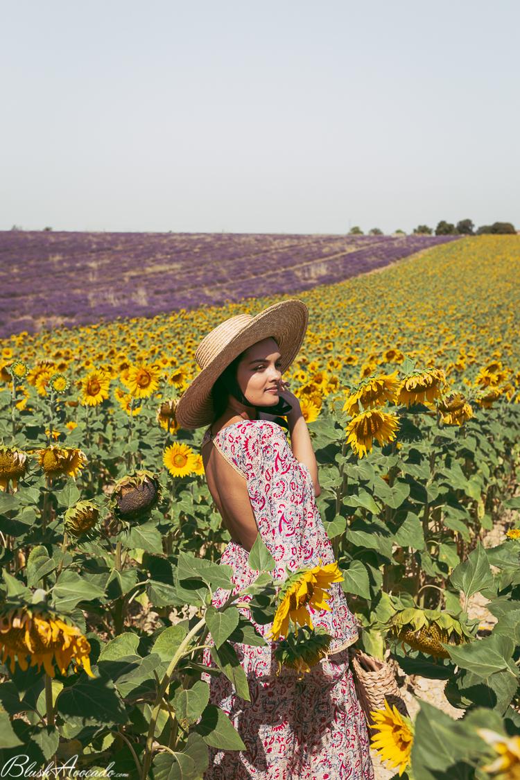 Sur le plateau de Valensole : mon premier champ de tournesols